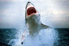 The Daily App: Shark Week -- Need We Say More?