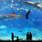 If This Amazing Aquarium Is the 2nd Largest In the World, the Largest Must've Been the Ocean.