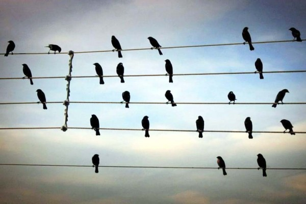 This Looks Like a Flock of Birds. And It Is. But Listen Closely and… Whoa!