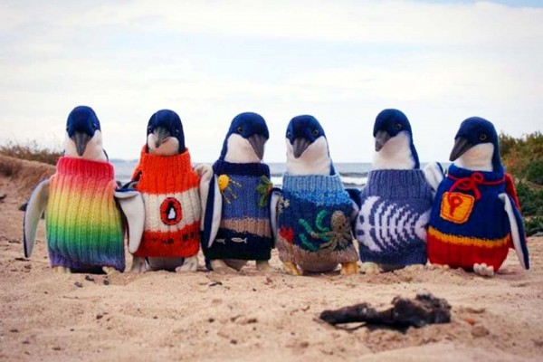 These Adorable Penguins Are More Fashionable Than I'll Ever Be. The Reason Why Will Melt Your Heart.
