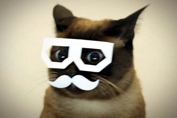 Take a Normal Cat, Add a Paper Mustache and Glasses, and See What Happens Next.