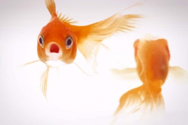 Clear Your Next 10 Minutes Because These 2 Fish Could Change How Happy You Are With Your Entire Life.