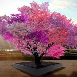 One Tree That Produces 40 Different Kinds of Fruits.