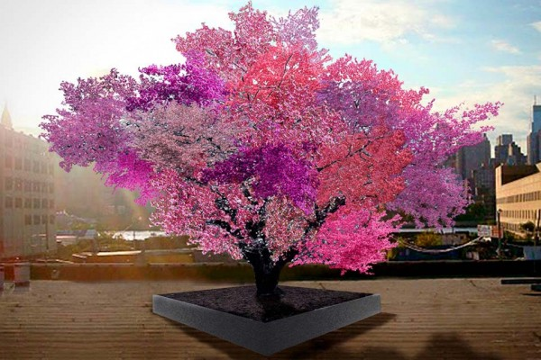 A Simple Tree That Grows 40 Kinds of Fruit.