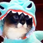 Here's a Video of a Cat In a Shark Costume Riding On a Roomba. There — I Said It.