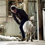 Watch One Sheep's Journey Into Fashion and Back.